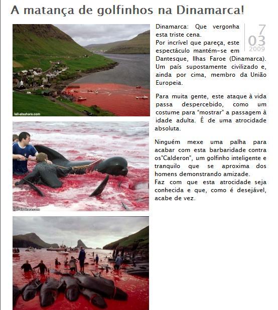 mmc golfinhos